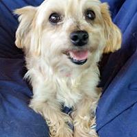 Adopt A Pet :: Trena - Pueblo, CO