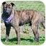 Photo 2 - Shepherd (Unknown Type) Mix Dog for adoption in Corona, California - DEXTER