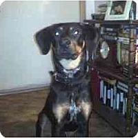 Adopt A Pet :: Taz - Acme, PA