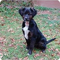 Adopt A Pet :: Puddy - Conyers, GA