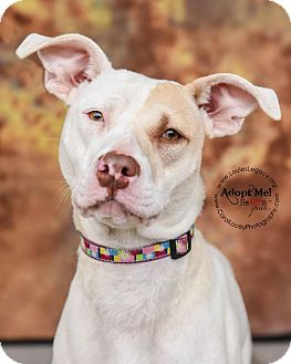 Pit Bull Terrier Mix Dog for adoption in Cincinnati, Ohio - Piper