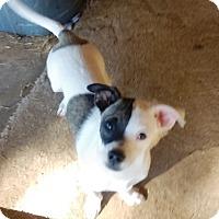 Adopt A Pet :: Rolf - Chandler, AZ