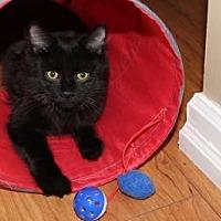 Adopt A Pet :: Midge - Hamilton., ON