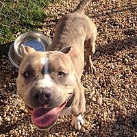 Adopt A Pet :: NYLA - Tinton Falls, NJ