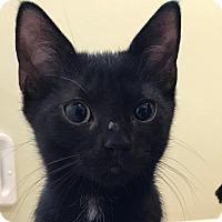 Adopt A Pet :: Liam - New York, NY