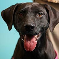 Adopt A Pet :: Dixie - Jackson, TN