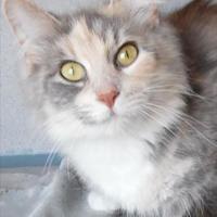 Adopt A Pet :: Callie - Waupaca, WI