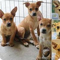 Adopt A Pet :: Litter of Six - Monroe, GA