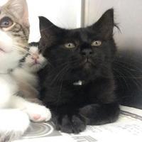 Adopt A Pet :: April - Wantagh, NY