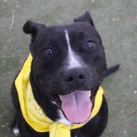 Adopt A Pet :: MICHIES 2 - Las Vegas, NV