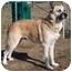 Photo 3 - German Shepherd Dog Mix Dog for adoption in Vineland, New Jersey - Slim Shady