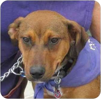 Shepherd (Unknown Type) Mix Dog for adoption in Detroit, Michigan - Solo-Pending