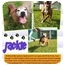 Photo 3 - Labrador Retriever/American Pit Bull Terrier Mix Dog for adoption in Orlando, Florida - Jackie