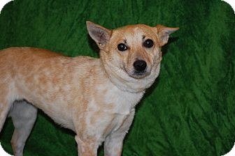Terrier (Unknown Type, Small) Mix Puppy for adoption in Lexington, Kentucky - Smiley