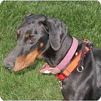 Adopt A Pet :: Lacie--adopted!! - New Richmond, OH