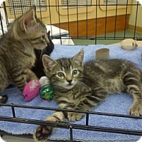 Adopt A Pet :: Nickels - Vero Beach, FL