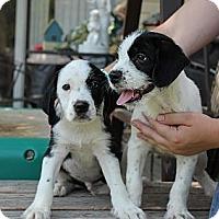 Adopt A Pet :: Dre and Snoop - Alliance, NE
