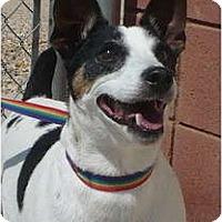Adopt A Pet :: BLINKY - Scottsdale, AZ