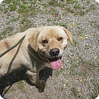 Adopt A Pet :: #250-14 @ Animal Shelter - Zanesville, OH
