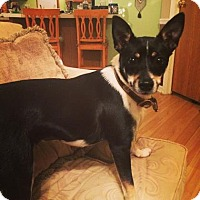 Adopt A Pet :: Fancy - Rockaway, NJ