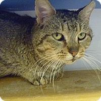 Adopt A Pet :: Alvin - Hamburg, NY