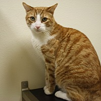 Adopt A Pet :: Gabriel - North Hollywood, CA