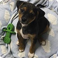 Adopt A Pet :: Janey - Washington, PA