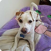 Adopt A Pet :: Pippen - San Diego, CA