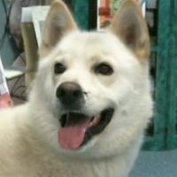 Adopt A Pet :: 155480 - Bakersfield, CA