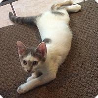 Adopt A Pet :: London - Mt Pleasant, PA