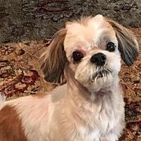 Adopt A Pet :: Sam Keeley - Euless, TX