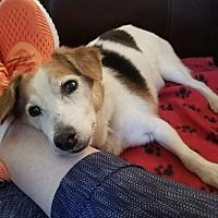 Adopt A Pet :: Fitzgerald - Kennesaw, GA