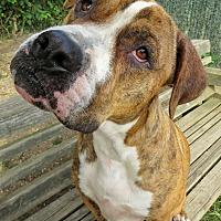 Adopt A Pet :: Skippy - West Babylon, NY