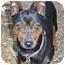Photo 3 - Miniature Pinscher Dog for adoption in Florissant, Missouri - Addie