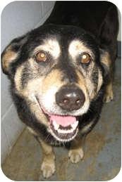 Shepherd (Unknown Type)/Husky Mix Dog for adoption in Columbia, Illinois - Monroe