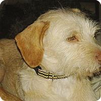 Adopt A Pet :: Amos - San Ysidro, CA