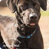 Adopt A Pet :: Suzie - Crawfordville, FL