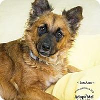 Adopt A Pet :: LouAnn - Phoenix, AZ