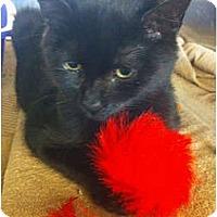 Adopt A Pet :: Larry - Secaucus, NJ