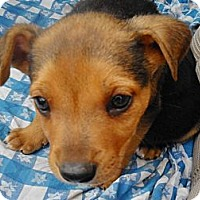 Adopt A Pet :: Champ - San Diego, CA