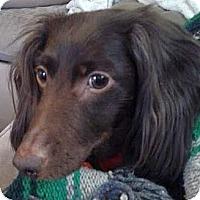 Adopt A Pet :: Sheldon - PA - Jacobus, PA