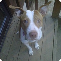 Adopt A Pet :: Honesty - Kimberton, PA
