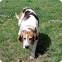 Adopt A Pet :: Mia - Salem, WV