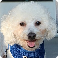 Adopt A Pet :: Gizmo - La Costa, CA