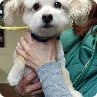 Adopt A Pet :: Einstein - Freeport, NY