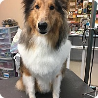 Adopt A Pet :: Chase (Adopted) - New Castle, PA