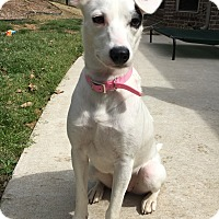 Adopt A Pet :: Denver - Weatherford, TX