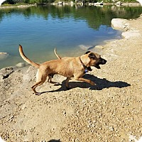 Adopt A Pet :: Sam - Boerne, TX