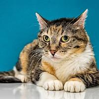 Adopt A Pet :: Darla - Chandler, AZ
