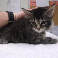 Adopt A Pet :: Harry - Williamsport, PA